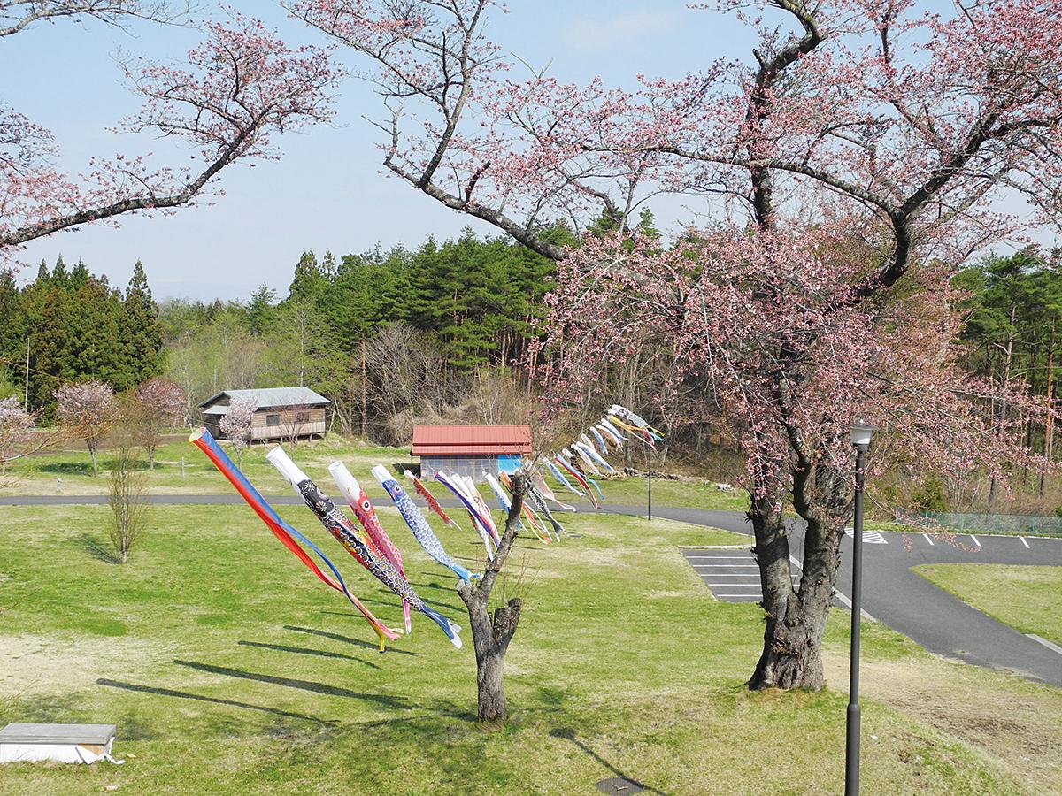 山の楽校 施設紹介 桜 鯉のぼり