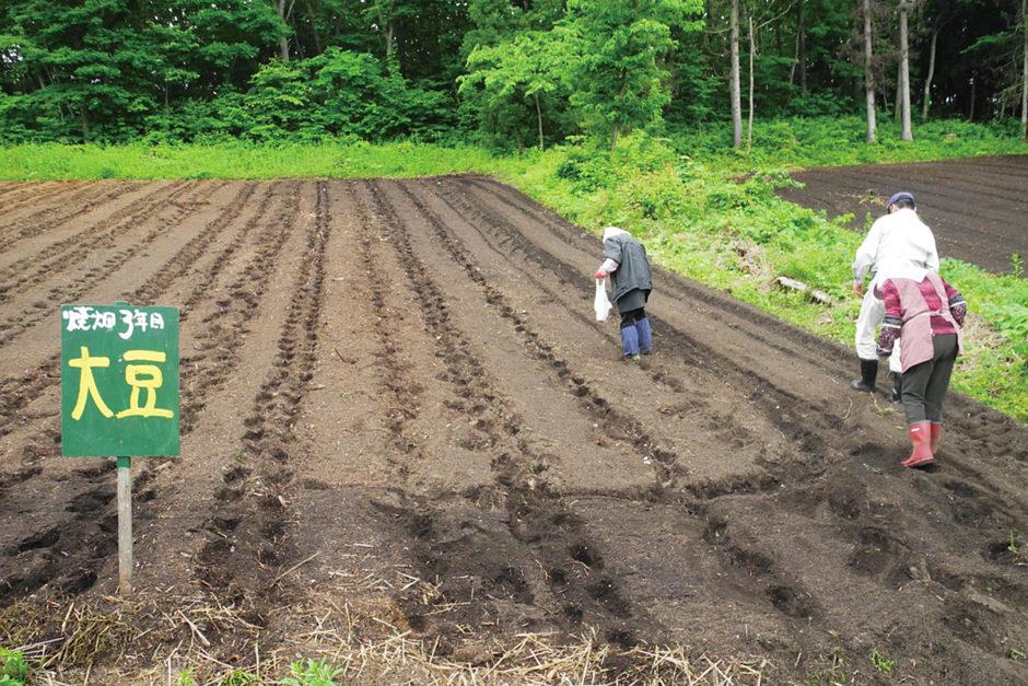 山の楽校 焼畑農法「あらきおこし」 大豆