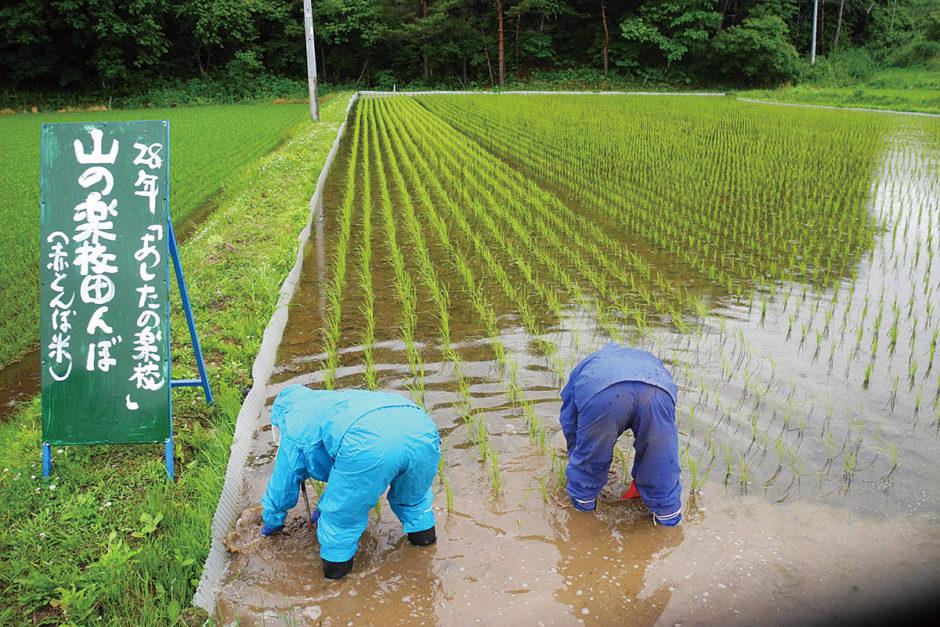 山の楽校 焼畑農法「あらきおこし」 田んぼ