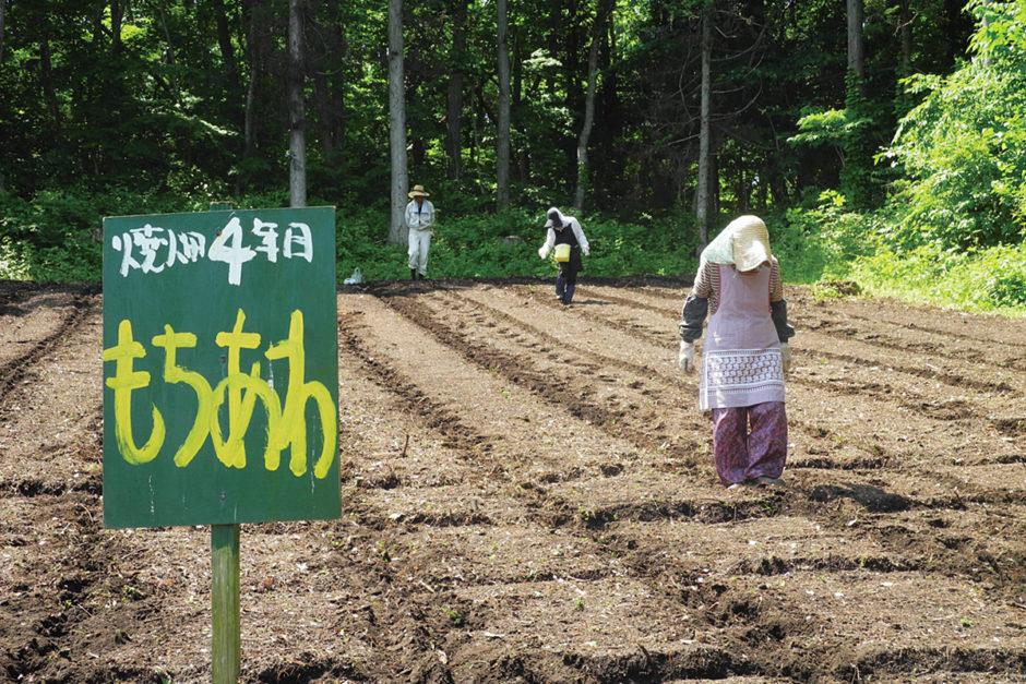 山の楽校 焼畑農法「あらきおこし」もち・あわ